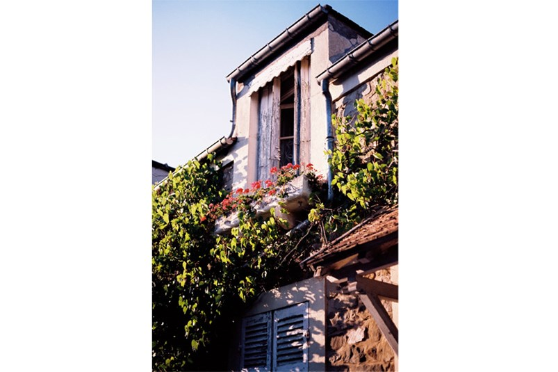 Rustic vines wrap around French shutters in Barbizon
