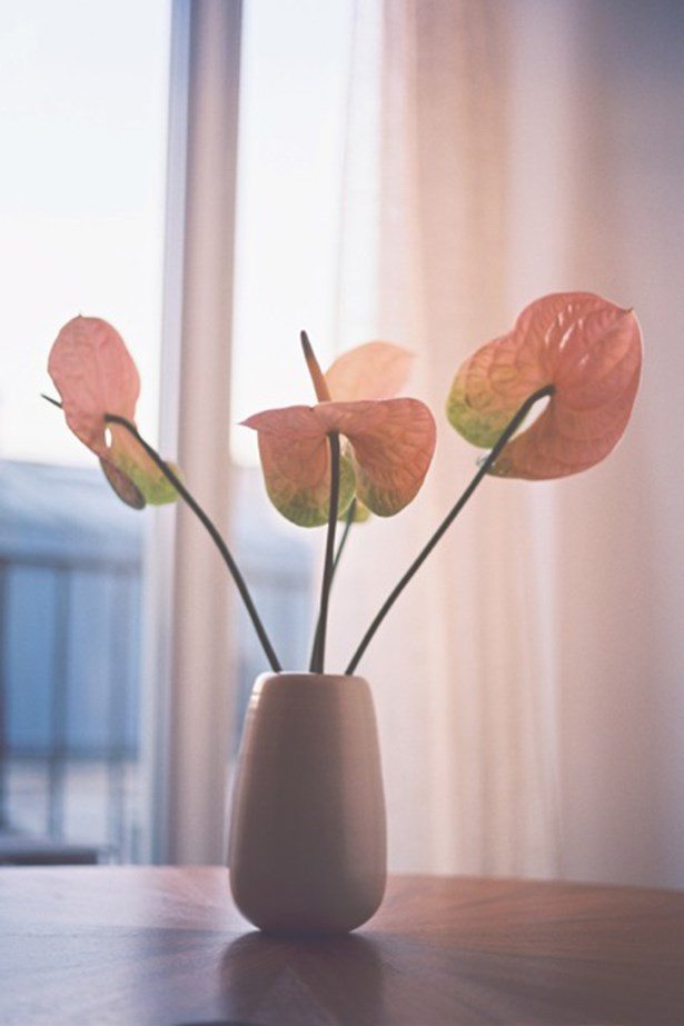 Watermelon Anthuriums are another favourite