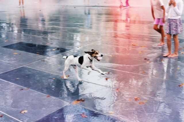 This adorable dog makes you want to run around the recently renovated Republique, too