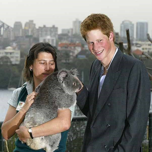 Like father, like son. Prince Harry had a cheeky twinkle in his eye when he met this koala in Sydney.