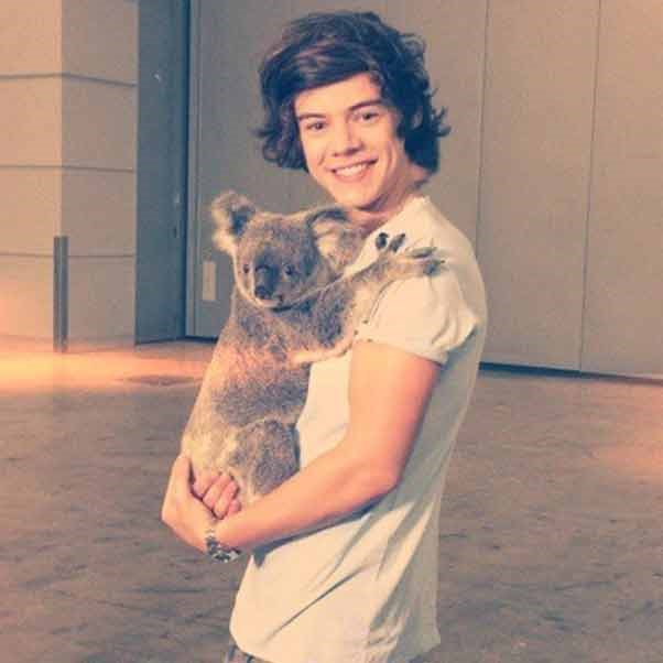 Every teenage girl in the world would swap places with this koala, which is getting up close and personal with One Direction's Harry Styles