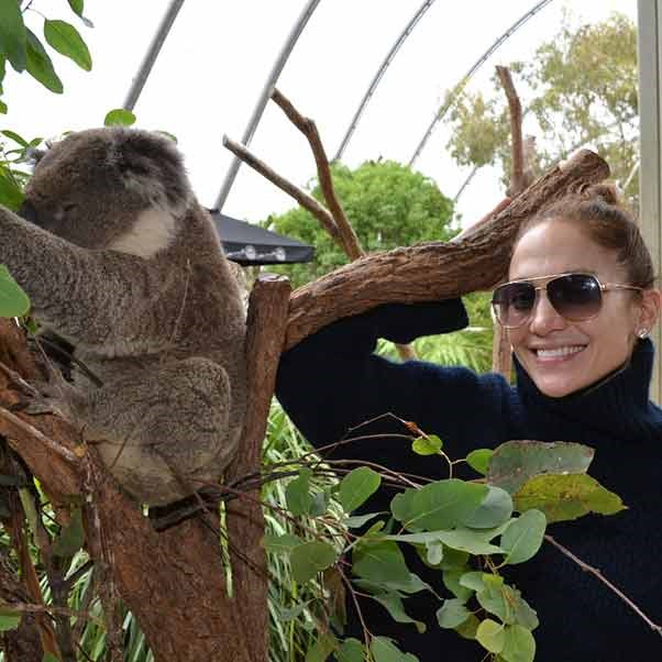 J. Lo is so cool, even a koala isn't enough to make her take off her shades.