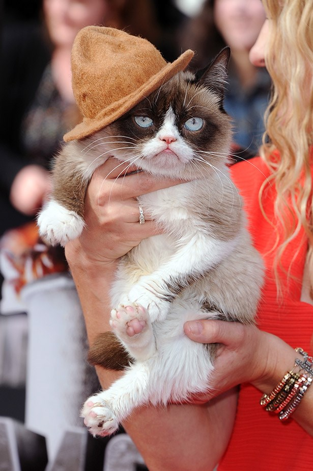 Grumpy Cat, clearly taking a style cue from Pharrell Williams won best hat of the night (sorry Johnny).