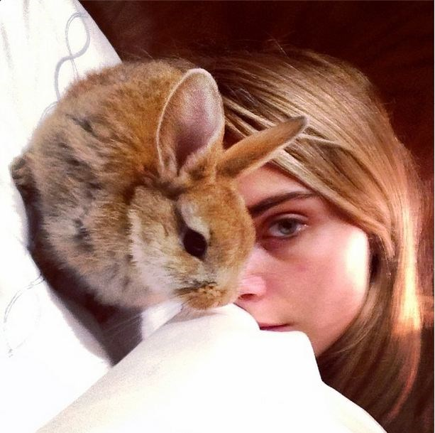 The only bunny you need to be following on Instagram: Cecil Delevingne.