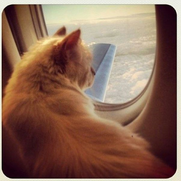The most famous and envied kitty in fashion, Choupette Lagerfeld.