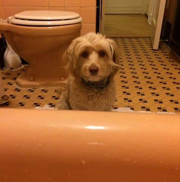 Lena Dunham's pup, Lambie, has a penchant for sleeping on tables and staring longingly at her owner in the bath.