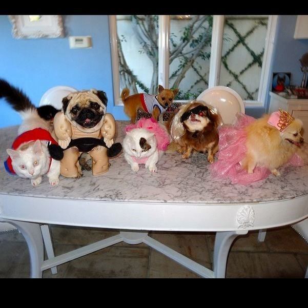 It seems that as we all get older, Paris Hilton and her pooches stay the same... here's her Chihuahua, Peter Pan and friends all dressed up with nowhere to go.