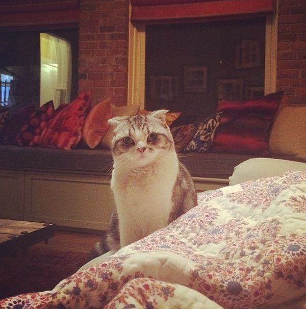 While her pal Cecil Delevingne may have the Instagram following, Taylor Swift's cat, Meredith is internet famous and the star of many-a-meme.