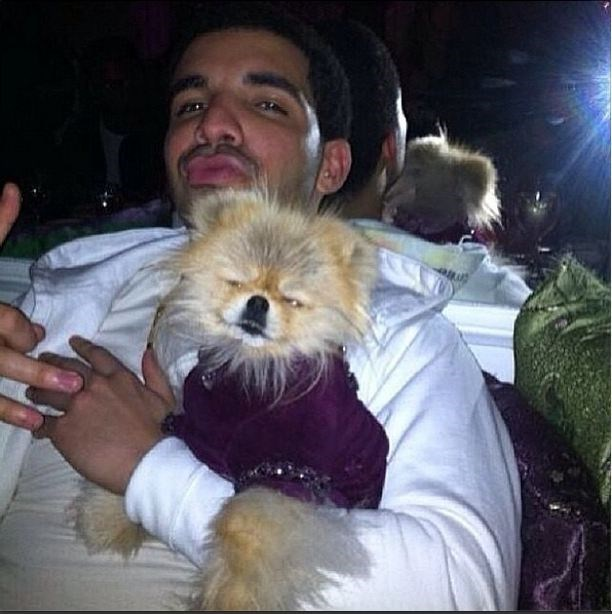 We saw this photo of Drake and then nothing was the same.