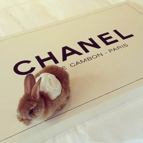 Further proof of her taste in the finer things in life (via Instagram: @cecildelevingne)