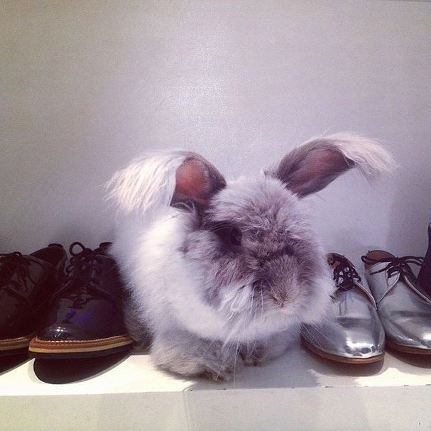 ...shoe fetishiser who resides in New York boutique Condor (via Instagram: @merlin_manhattan)