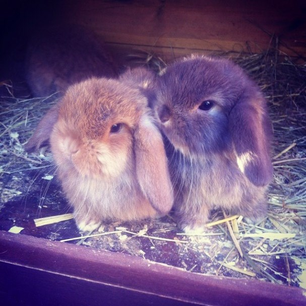 ELLE UK fashion assistant Molly Haylor's bunnies, Bunny and Willow
