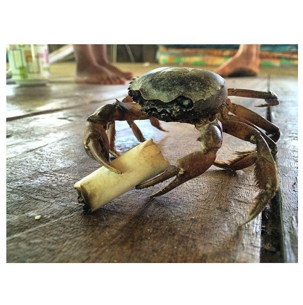 """<strong>""""#smokingcrab"""" <br><br> Instagram: @dotwillow </strong>  </strong>"""