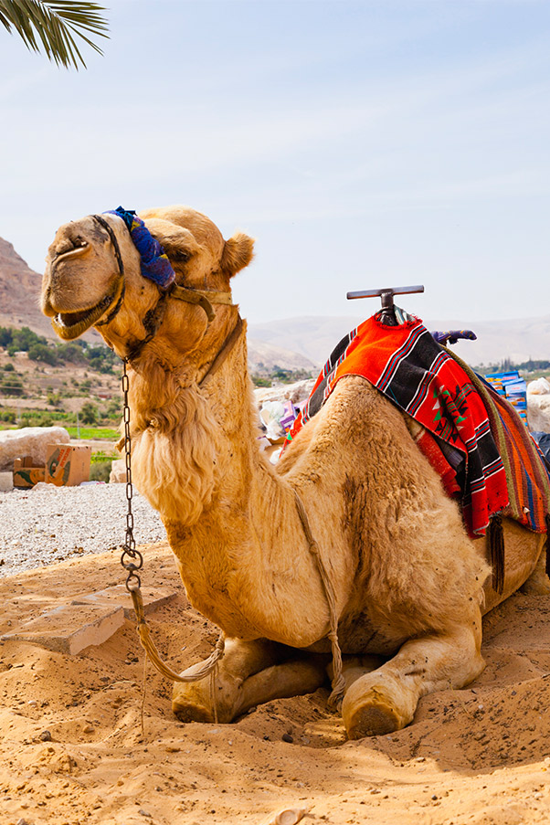 Camel Instant Win