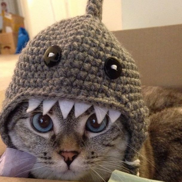 <strong>Nala Cat</strong><br> <strong>Claim to Fame</strong>: Being a fierce competition for Snoopybabe (dem eyes!), Nala is most famous for her interpretation of 'The Shark'. In fact, wearing the handmaid crochet shark beanie has made her so popular, that she's now the proud owner of an online store. Her over 1.3 million Instagram-fans have to wait for up to two weeks to receive one of her famous hats.