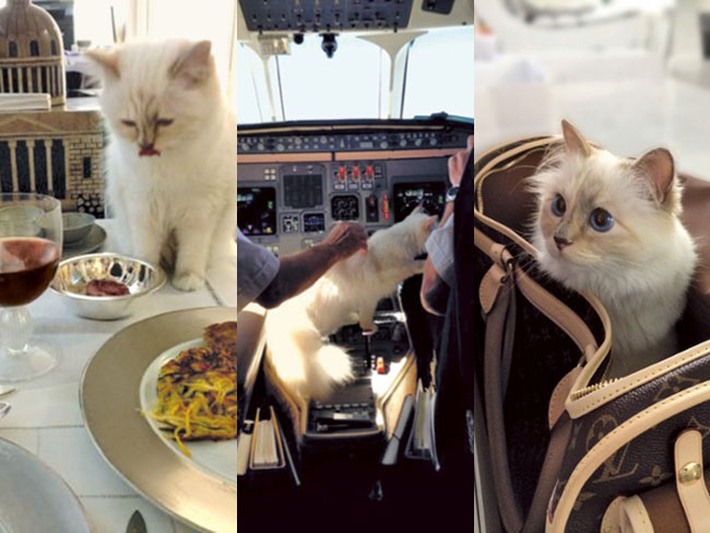 Choupette has a better life than you