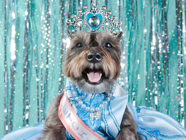 Dogs have beauty pageants too...