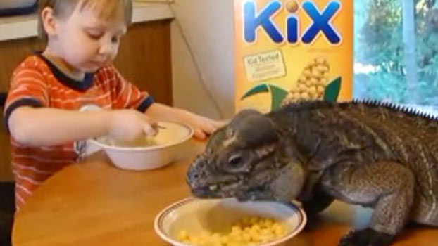 Fussy eaters: Invite an iguana to breakfast