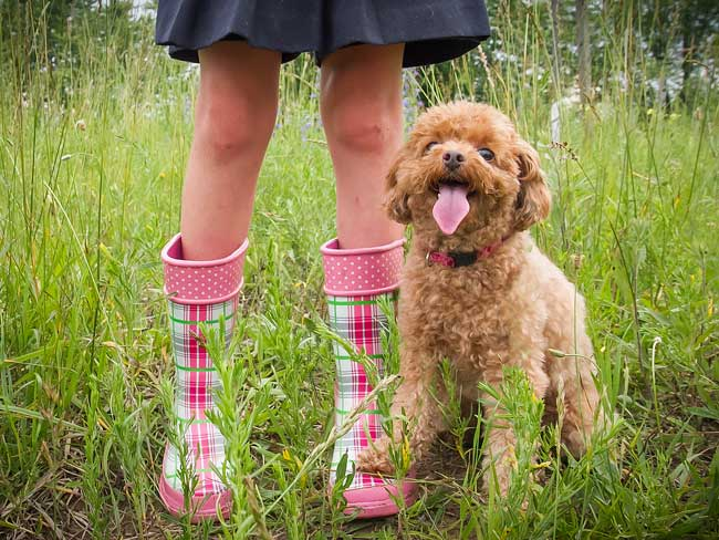 Hypoallergenic dogs for allergy sufferers