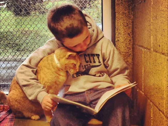 Kids reading to homeless cats = adorable pictures that go viral