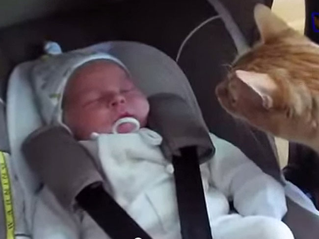 Cute video shows babies meeting pets for the first time