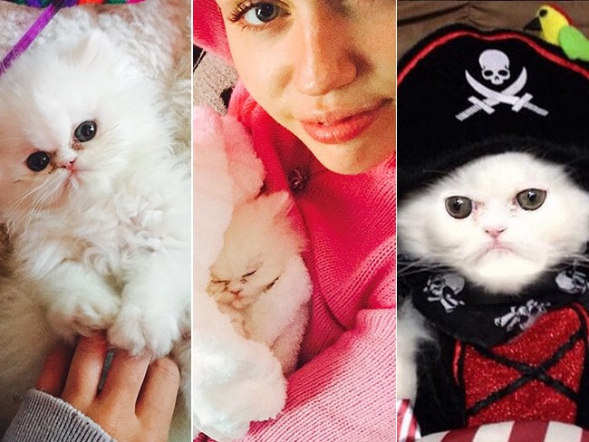 Miley Cyrus' new cat the cutest thing ever