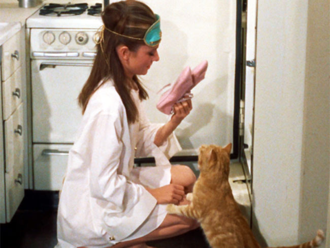 11 things you'll know if your cat is your boyfriend