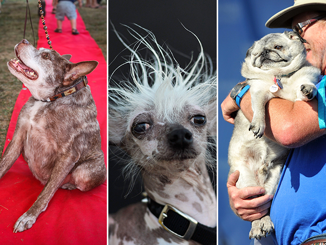 See the ~babefest~ that was the World's Ugliest Dog Competition