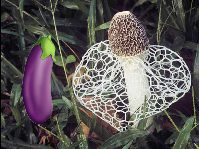 Um, scientists found a mushroom that triggers an instant orgasm