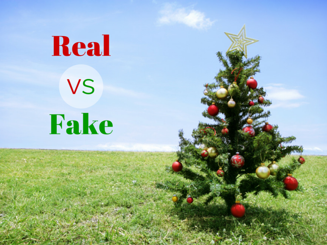 Real or Fake Christmas Tree