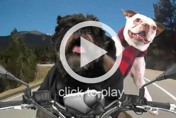 One Direction 'Kiss You' dog parody