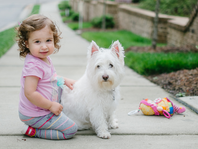 Best dogs for kids & babies