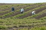 Bentleys survey shows agribusiness optimistic in 2013