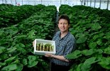 Shima Wasabi's Stephen Welsh with a box of freshly harvested wasabi