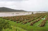 Landholders affected by tropical cyclone Ita will not require a permit for watercourse clean-up
