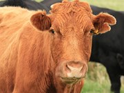 Favourable weather boosted production for dairy, sheep and beef products.